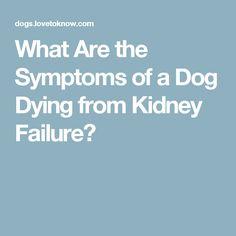 20 Mickey Ideas Renal Disease Kidney Disease Diet Renal Failure