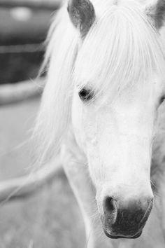 Shetland Pony In B by LaurelCrownPhoto on Etsy