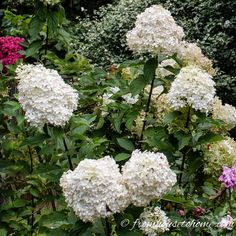 These shrubs with white flowers will be perfect for a white garden. Whether your yard is in sun or shade, or you're looking for landscaping ideas for front yards or backyards, there are some beautiful bushes on this list that will work with your garden landscape. #fromhousetohome #plants #bushes #shrubs #whiteflowergarden #gardeningideas Garden Front Of House, Trees For Front Yard, Small Front Yard Landscaping, Front Yards, Azaleas Landscaping, Landscaping Ideas, Backyard Landscaping, Big White Flowers, Beautiful Flowers