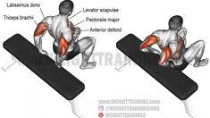 A beginner compound bodyweight exercise. Synergists: Anterior Deltoid Upper and Lower Pectoralis Major Pectoralis Minor Rhomboids Levator Scapulae and Latissimus Dorsi. Dynamic stabilizer (not high Fitness Workouts, Fitness Gym, Sport Fitness, Corps Fitness, Best Chest Workout, Chest Workouts, Chest Exercises, Tummy Workout, Triceps Workout