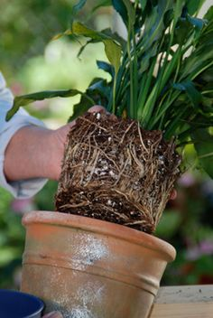 transplanting house plants