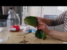 Kökü olmayan orkideyi kurtarma çalışması (rescue the rootless orchid) - YouTube
