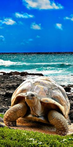 14. Galapagos Islands The Galápagos Islands and their surrounding waters form the Galápagos Province of Ecuador, the Galápagos National Park, and the Galápagos Marine Reserve. The principal language on the islands is Spanish. The islands have a population of slightly over 25,000.