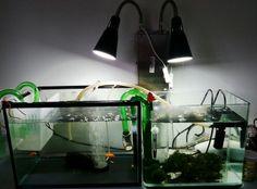 IKEA hack. Using clamp lights as aquarium lights