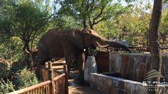 The Etali Experience Romantic Places, Elephant, Travel, Animaux, Trips, Traveling, Elephants, Tourism, Outdoor Travel