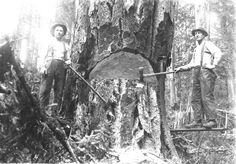 Logging Seattle | Two Swedish emigrants, John and CharlesLind. John Lind on the right ...