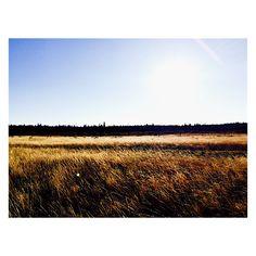 West Yellowstone West Yellowstone, Vineyard, Mountains, Nature, Travel, Outdoor, Outdoors, Naturaleza, Vine Yard