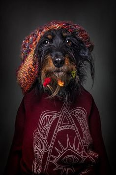 14 Photos Of Dogs Dressed In Human Clothing Based On Their Personalities - World's largest collection of cat memes and other animals Dog Furniture, Dog Clothes Patterns, Dog Selfie, Dog Modeling, Dog Wear, Dog Dresses, Pet Clothes, Dog Clothing, Dog Coats