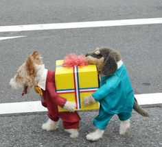 Maybe The Most Awesome Dog Costume Ever