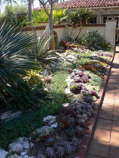 succulent garden | Cactus & Succulent Garden at Sherman Gardens