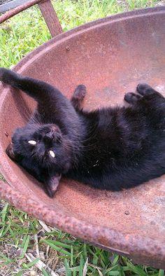 My Kitty Blackie :)   (hers not mine)