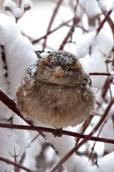 Karlar içinde minik bir serçe...