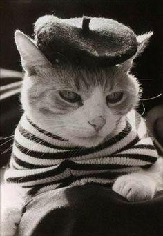 cutest kitty!