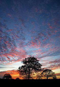 ✮ Texas Sunset