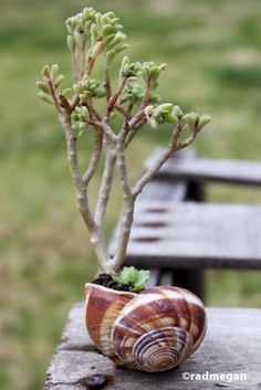 Shell + Succulent = So Cute!
