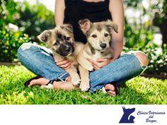 Cuida a tu mascota del fuerte calor. CLÍNICA VETERINARIA DEL BOSQUE. Las altas temperaturas de primavera y verano provocan trastornos en el modo de vida y en la salud de las personas. Y también los provocan en nuestras mascotas, principalmente en perros y gatos, no los expongas al calor y PROHIBIDO dejarlos en el coche. Te invitamos a consultar nuestra página web para conocer nuestros servicios. www.veterinariadelbosque.com