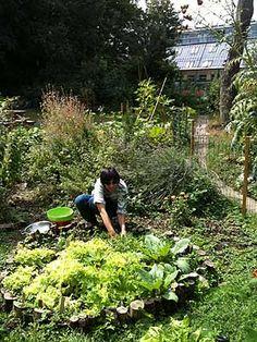 Clissold Community Garden