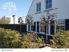 Voordelige leibomen bij Van Den Akker Bomen in Oirschot - Leiboomspecialist.nl Prunus, Multi Story Building, Garden, Garten, Gardening, Peach, Outdoor, Gardens, Yard