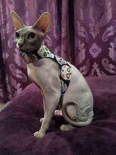 Hey, I found this really awesome Etsy listing at https://www.etsy.com/listing/221823236/custom-made-to-order-cat-walking-jacket