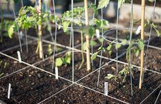 five-important-lessons-for-beginner-gardeners-and-people-who-may-have-killed-the-only-houseplant-theyve-ever-owned_sprouts_600c390