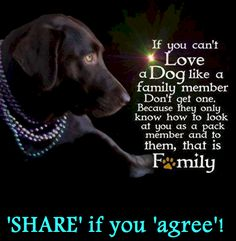 If you can't love a dog like a family member, don't get one.