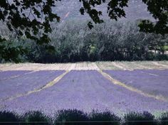 Lavender-Lavendre - Franschhoek Beautiful Homes, Most Beautiful, Lavender Decor, Lavender Fields, Cape Town, Time Travel, Places To See, South Africa, Followers
