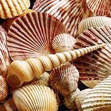 Image result for https://www.pinterest.se/bggbalg2013/wonders-of-the-sea/