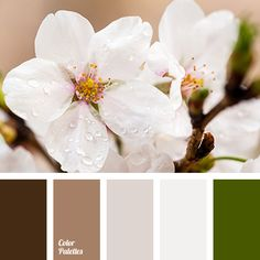 Color Palette #2755