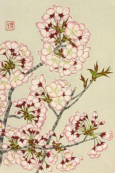 Cherry blossom 河原崎奨堂 『桜』-木版画