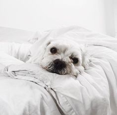 // pinterest and insta → siobhan_dolan // awww this one looks like my old lil doggy I used to have