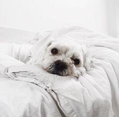 puppy, dog, cute, animals, tumblr // pinterest and insta → siobhan_dolan
