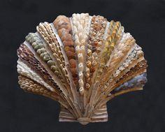 Scallop shell - katherine lloyd