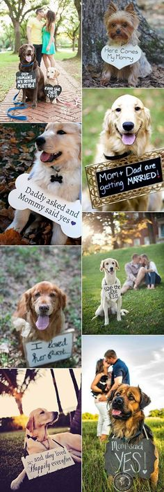 precious wedding photo ideas with dogs