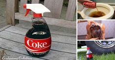 Coca-Cola è uno dei marchi più conosciuti nella storia, tuttavia la bevanda stessa è un veleno per il nostro organismo: ecco come impiegarla in altri usi.