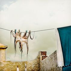 Octopus hanging on a clothing line in Greece