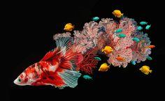 I pesci si fondono con il corallo nei dipinti iperrealistici di Lisa Ericson