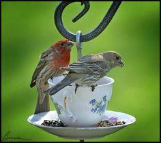 """mangeoire à oiseau. """"un goûter autour d'une tasse de thé?"""""""