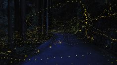 "Fireflies in Japan, via escapeintolife.com: ""the original source is the Japanese language website Digital Photo Blog"""