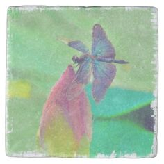 Iridescent Blue Dragonfly on Waterlily Stone Coaster  Iridescent Blue Dragonfly on Waterlily Stone Coaster  			  		 			 $11.10  			 by  Tannaidhe  http://www.zazzle.com/iridescent_blue_dragonfly_on_waterlily_stone_coaster-256347049759343254