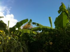 Great Dixter Exotic Garden