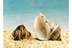List of Foods Hermit Crabs Can Eat | eHow