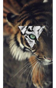 Tiger inspiration wallpaper