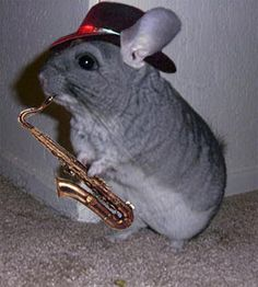 Funny Saxophone Pictures | Funny Chinchilla Pictures/Images