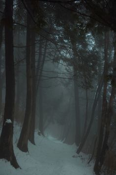 """The woods are wide, dark, and deep..."" perfect quote for a writing exercise..hmm.."