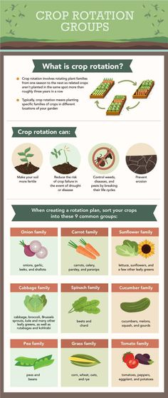 Crop Rotation Examples and Plant Families - Family Food Garden