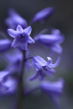 pale blue by ~~Dirk Rauschkolb, via Flickr  @Lensbaby