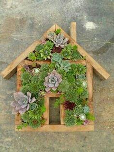 DIY house succulent