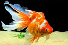 1000 images about goldfish and koi on pinterest ryukin for Scott and white fish pond