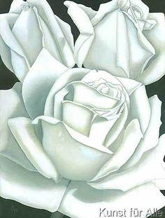 Birgitt Wolny - Rose weiss