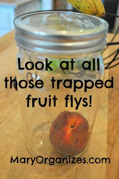 THE GNAT TRAP - say goodbye to fruit flys! Easy Easy Easy!